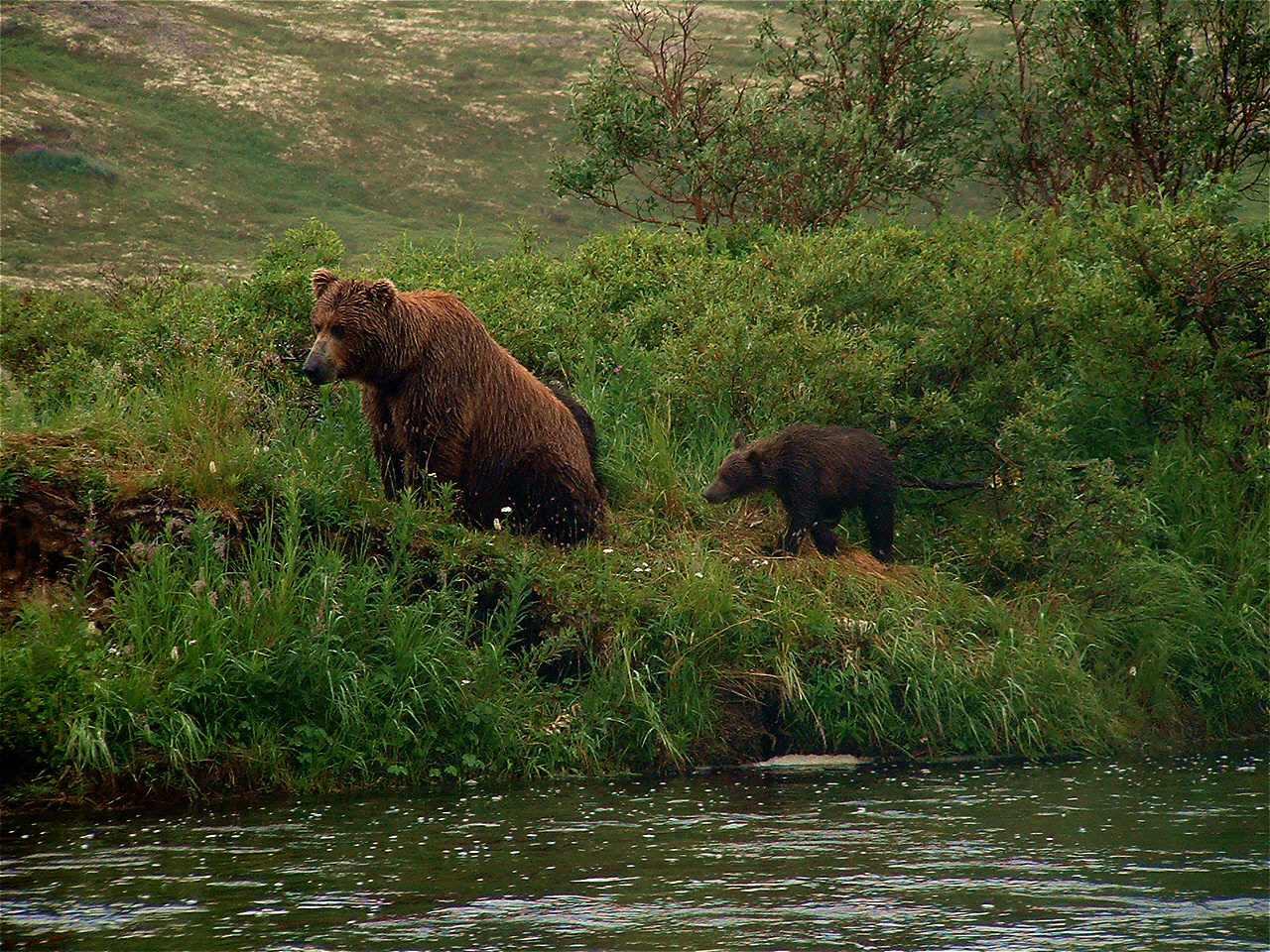 American Creek - Trophy Katmai Rainbow Trout - ALASKA RAFT CONNECTION
